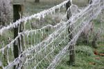 frozen-fence.jpg