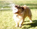 teddy-water-hose1.jpg